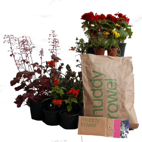 The Festival - selection of plants