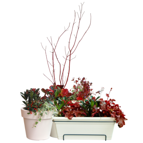 The Fire Starter - selection of plants
