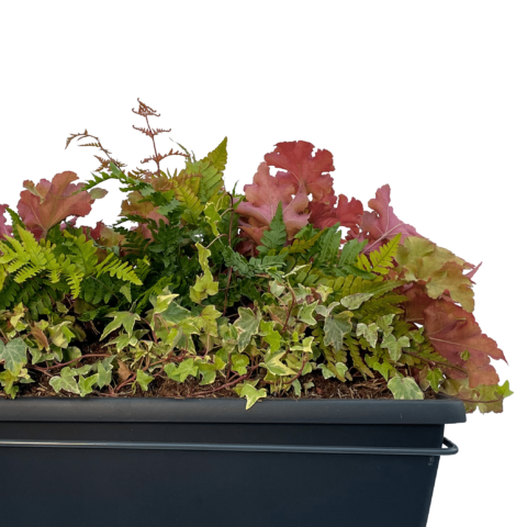 The Forest Floor - Window box