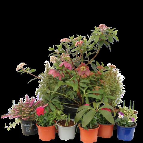 The Hug - selection of plants