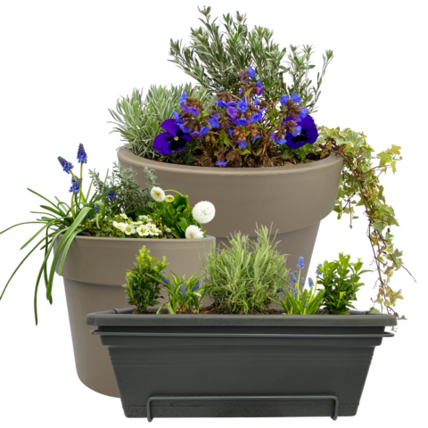 The Silver - selection of plants