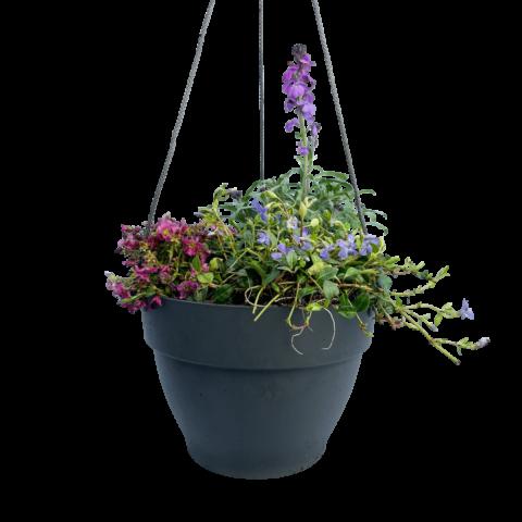 The Smile - Hanging basket