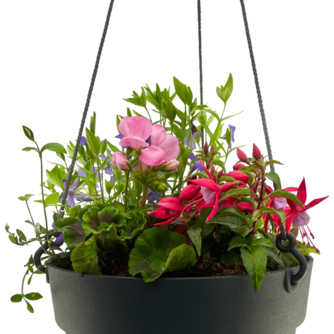 The Peacock - Hanging basket