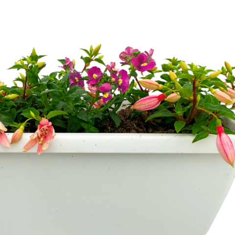 The Bee & Butterfly - Small window box