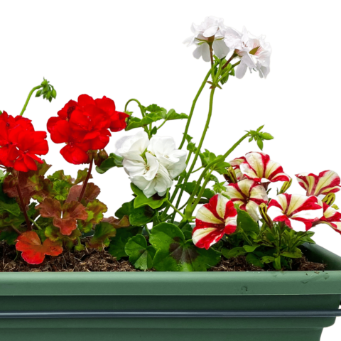 The Candy Cane - Window box