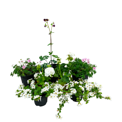 The Vow - Selection of plants