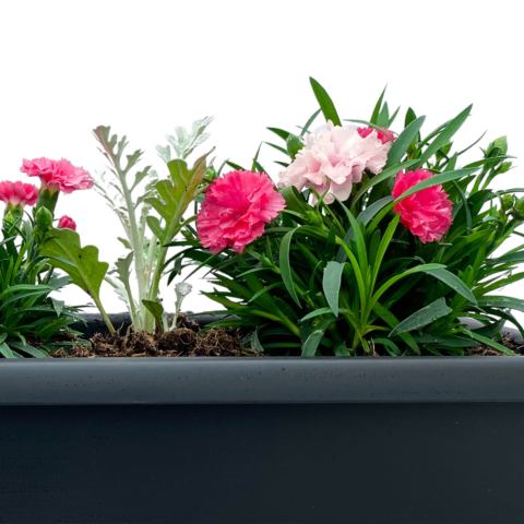 The Vow - Small window box