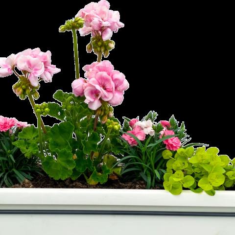 The Vow - Window box