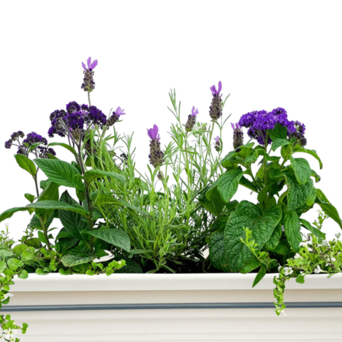 The Volley - Window box