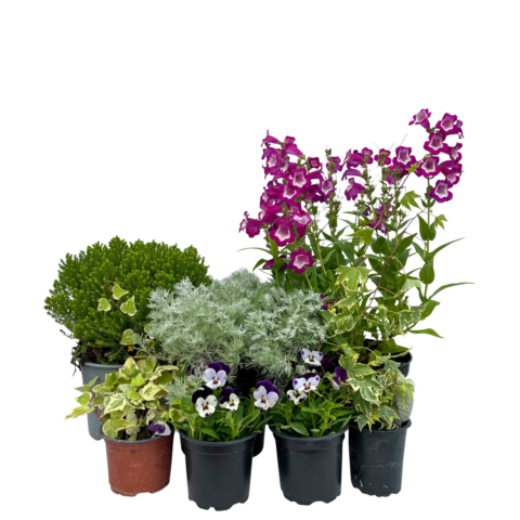 The Soft Touch - Selection of plants