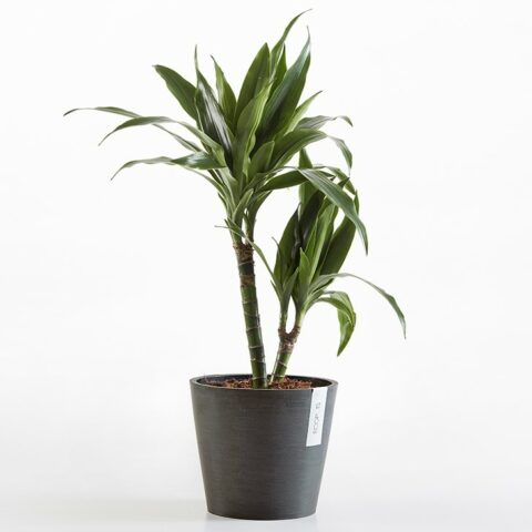 ECOPOTS Round Pot - Medium (30cm)