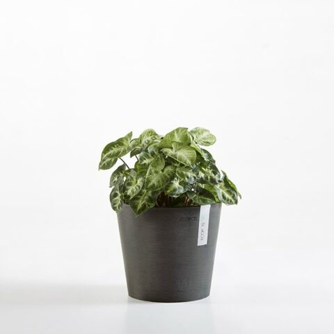ECOPOTS Round Pot - Small (20cm)