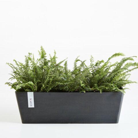 ECOPOTS Window Box Trough (55cm)