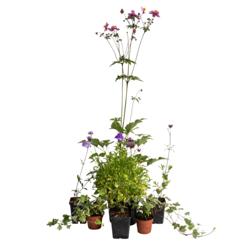 The Late Bloomer - Selection of plants